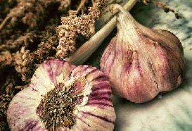 Época de siembra del ajo