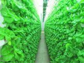 Comestibles del futuro: extraños por varios tienen el poder de cambiar nuestra nutrición