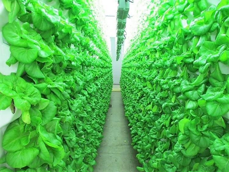 Alimentos del futuro: desconocidos por muchos tienen el poder de revolucionar nuestra alimentación 2