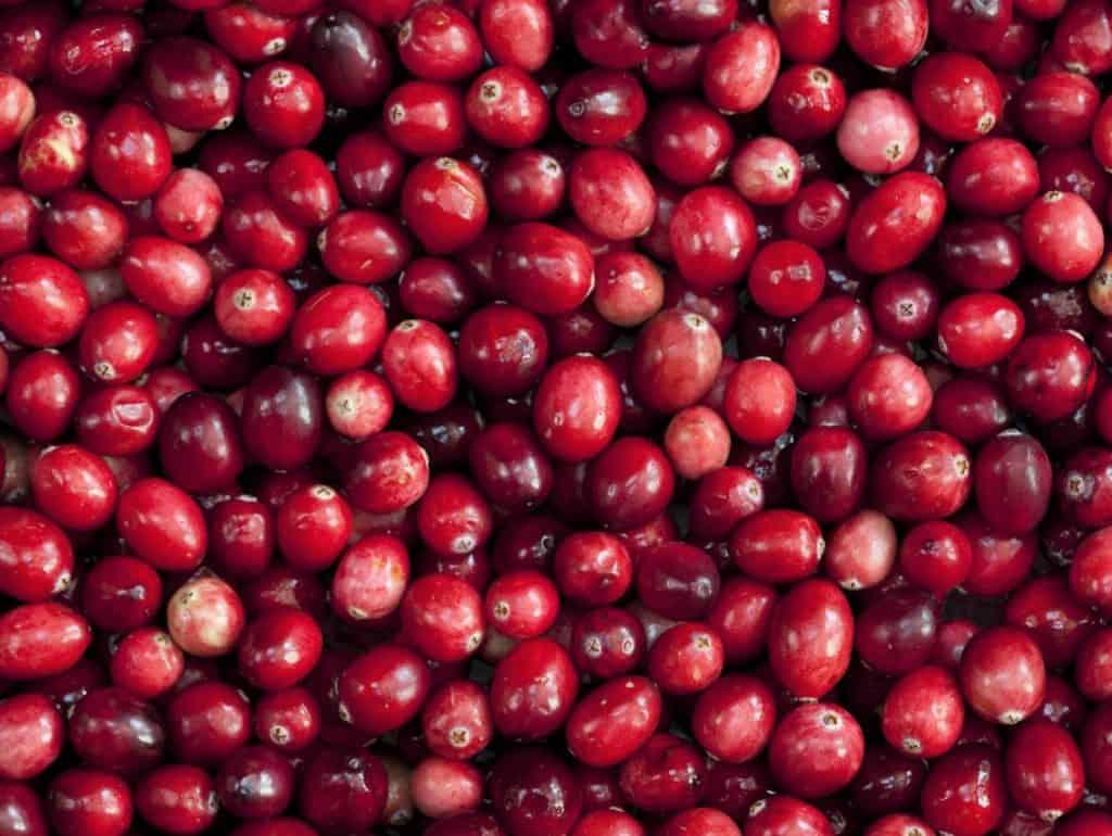 Arándano Rojo, usos, beneficios y contraindicaciones 1
