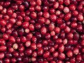 Arándano Rojo, usos, provecho y contraindicaciones