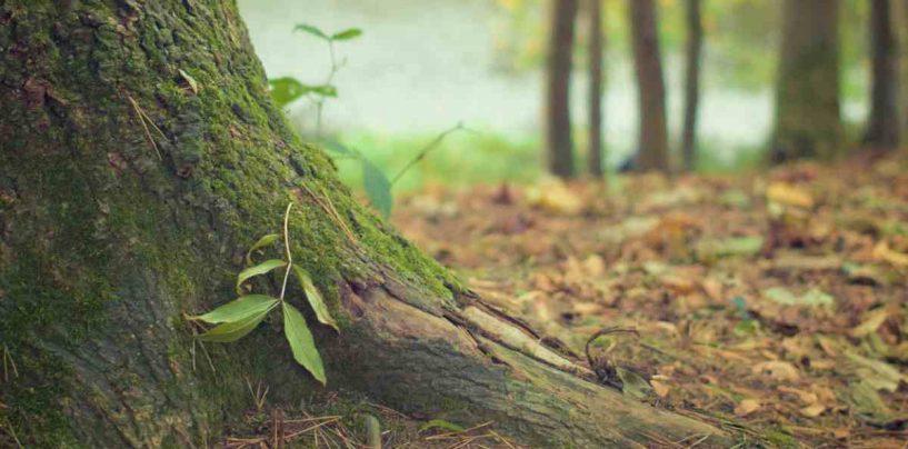 Bioma: qué es y qué tipos hay