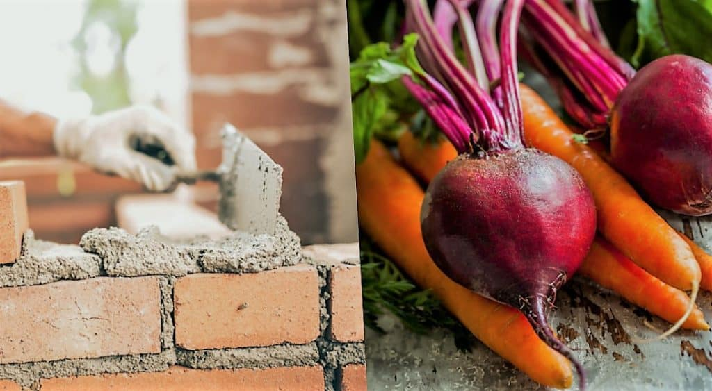 Cemento ecológico de Remolachas y Zanahorias 1