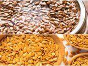 Semillas de lino: caracteristicas, provecho, contraindicaciones
